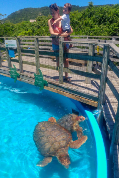 project tamar turtle sanctuary in Barra da Lagoa